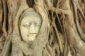 Buddha Head In A Tree Root