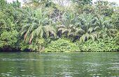 Beautiful Tropic Scenics