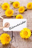 Yellow Flowers With Bienvenido