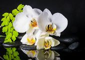 stock photo of fern  - Beautiful spa setting of white orchid  - JPG