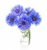 Blue cornflower. Flower bouquet isolated on white.