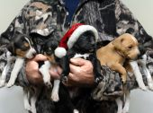 Adorable Hunting Dog For Christmas