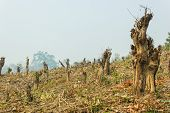 Slash And Burn Cultivation, Rainforest Cut And Burned To Plant Crops