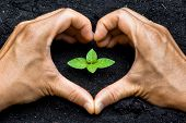 stock photo of sustainable development  - two hands forming a heart shape around a young green plant  - JPG