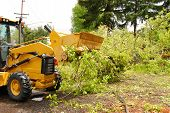 stock photo of hurricane wind  - Cleanup operations of a large oak tree that had fallen across a city street following a wind storm in Oregon - JPG