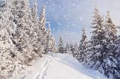 stock photo of cold-weather  - Winter landscape with snow drifts and a footpath in a mountain forest - JPG