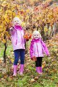 little girls in autumnal vineyard