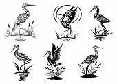 Stork, heron, crane and egret birds