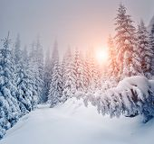 Fantastic landscape glowing by sunlight. Dramatic wintry scene. Carpathian, Ukraine, Europe. Beauty world.