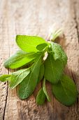 fresh sage herb leaves on rustic wooden background