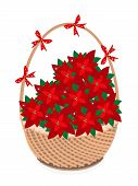 Brown Basket of Red Christmas Poinsettia Flower