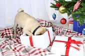 picture of christmas dog  - Funny - JPG