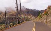 Still Damaged Landscape Blast Zone Mt St Helens Volcano