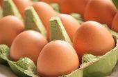 Eggs In Green Cartone Diagonal Perspective