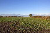 Autumn Arable Landscape