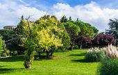 Sunny Italian Garden