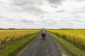Farmland Near Royan With Cyclist.
