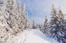 stock photo of snow forest  - Winter landscape with snow drifts and a footpath in a mountain forest - JPG