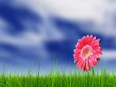 picture of pastures  - Concept or conceptual green fresh summer or spring grass field and a flower over a blue sky background - JPG