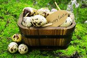 picture of grass bird  - Bird eggs in wooden bucket on green grass background - JPG