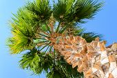 stock photo of tree leaves  - Palm tree on blue sky background - JPG