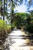 picture of rainforest  - The road in the rainforest on the island of Gili Meno Indonesia - JPG