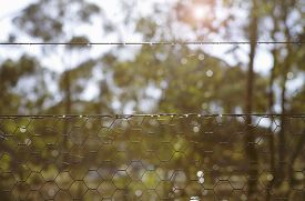 image of chicken-wire  - Backlit morning sunshine in bush setting looking through chicken wire fence - JPG