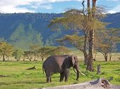 Wild Elephant With Tropical Mountains Behind In The African Savanna, Ngorongoro Park, Tanzania
