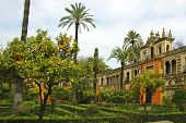 a view of the garden in the Alcazar of Seville, Spain