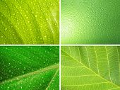 set of green nature backgrounds