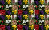Collage Of Flowers 3