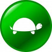 turtle button