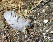 Feather On The Ground 2