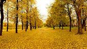Mellow autumn in park in Vitebsk