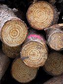 Close Up Of A Log Pile