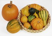 Decorative Gourds