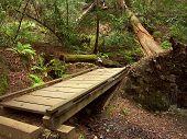 Muir Woods Bridge