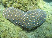 Underwater Loving Heart