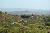 Hills Of Valdobbiadene
