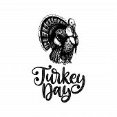 Turkey Day, Hand Lettering On White Background. Vector Illustration Of Turkey Bird For Thanksgiving  poster