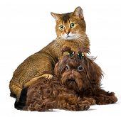 Puppy and cat in studio