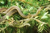 picture of harmless snakes  - unwanted visitor - JPG