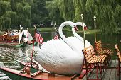 Swan Boats in the Public Gardens of Boston, a popular tourist attraction