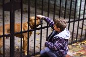 Dogs Are Helpful. Small Boy Plays With Dog In Dogs Shelter. Small Boy Patting Dog On Head. A Dog In  poster