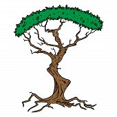 Tree With Foliage Icon. Vector Illustration Of A Tree With Green Foliage. Hand Drawn Tree. poster