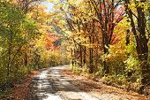 country road in the fall forest