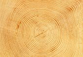 slice of wood timber natural background
