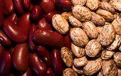 Kidney & Pinto Beans