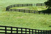 Kentucky Horse Farm near Lexington, KY USA