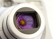 Digital Camera with Flower image reflected in the len